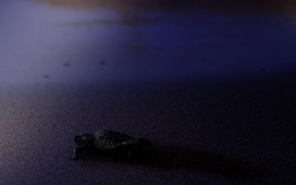 Turtle Night Sea Environment
